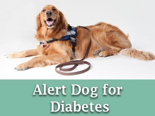 How Do Dogs Help With Diabetes?