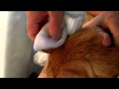 What Is A Normal Blood Sugar Level For A Cat?