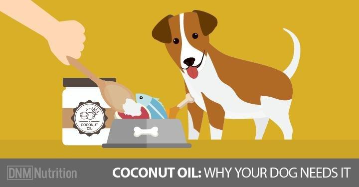 [updated] The Health Benefits Of Coconut Oil For Dogs