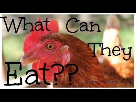 Hypoglycemia And Reduced Feed Intake In Broiler Chickens Treated With Metformin
