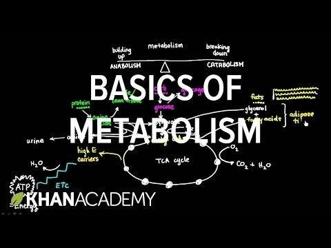 Basics Of Metabolism