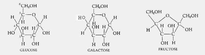 Why Is Glucose Not Stored In Its Monomeric Form In The Body