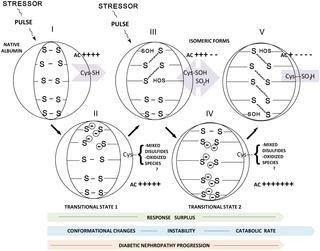 Albumin Antioxidant Response To Stress In Diabetic Nephropathy Progression