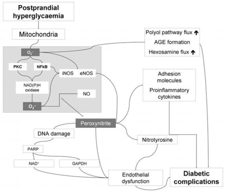 Type 1 Diabetes And Cardiovascular Disease