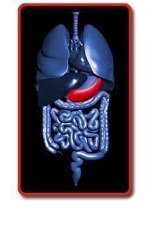 Pancreas – Diabetes