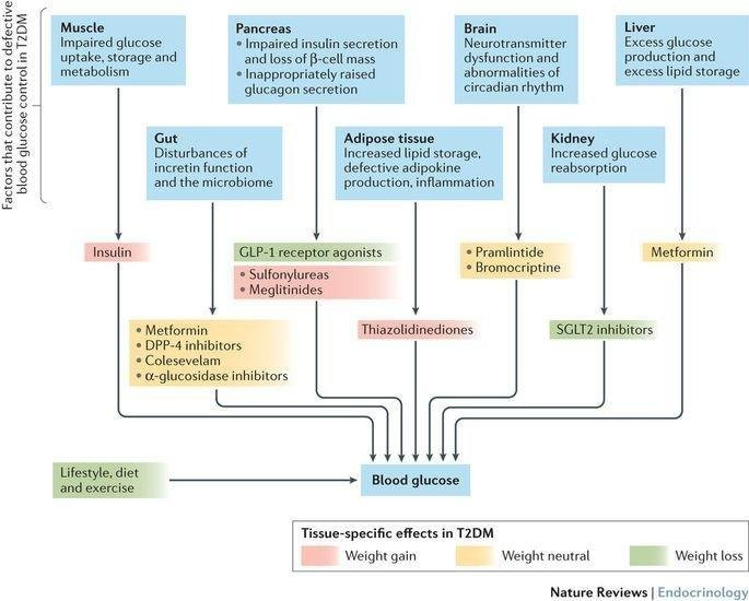 Pharmacology and therapeutic implications of current drugs for type 2 diabetes mellitus