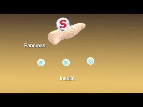 How Do Oral Hypoglycemic Drugs Work