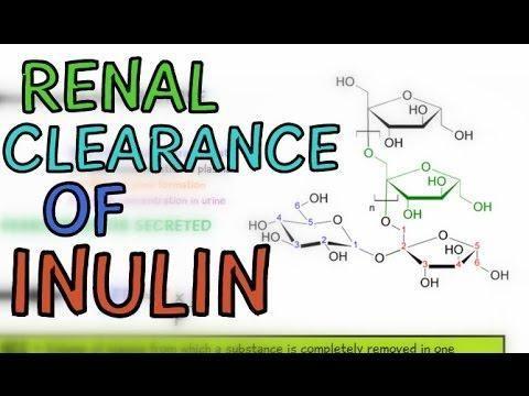 Is Insulin Filtered In Kidney?