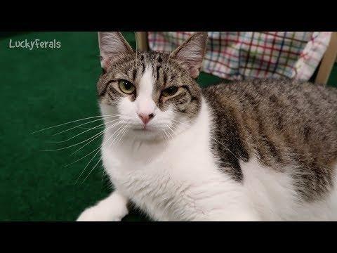 My Cat Is Diabetic. He Keeps Throwing Up. He Is Alos ...