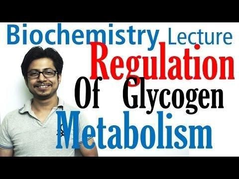What Hormone Promotes Breakdown Of Glycogen To Glucose By The Liver?