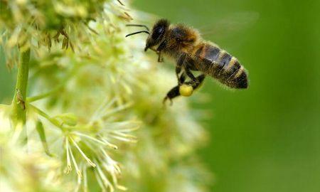 Is Tupelo Honey Good For Diabetics