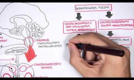 Metabolic Acidosis Compensation Mechanism