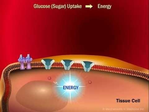 How Glucose Is Stored As Fat?