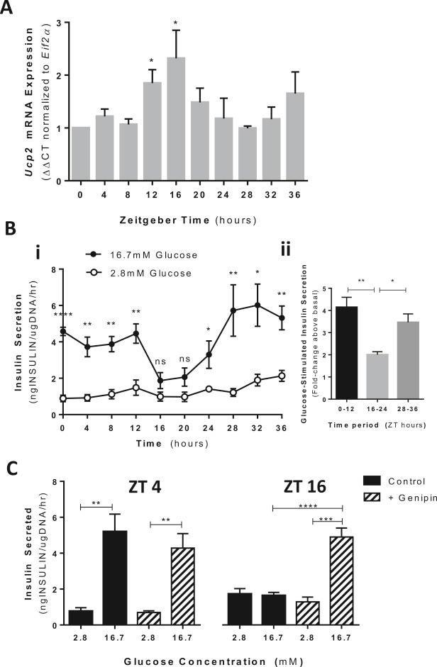 Brief Communication Uncoupling Protein 2 Regulates Daily Rhythms Of Insulin Secretion Capacity In Min6 Cells And Isolated Islets From Male Mice