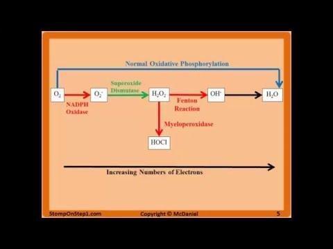 Vitamin C And Superoxide Dismutase (sod) For Diabetic Retinopathy