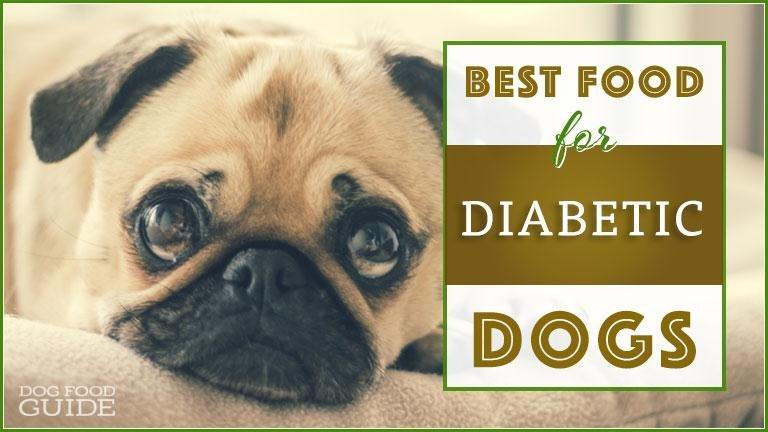 Best Dog Food For Diabetic Dogs