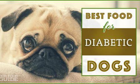 Dog Food Diabetes Brands
