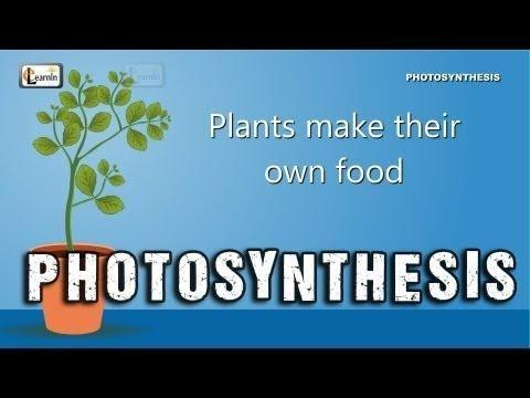 Where Is Glucose Produced In Plants
