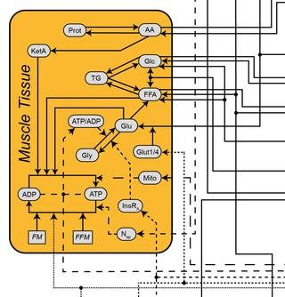 A Long-term Mechanistic Computational Model Of Physiological Factors Driving The Onset Of Type 2 Diabetes In An Individual