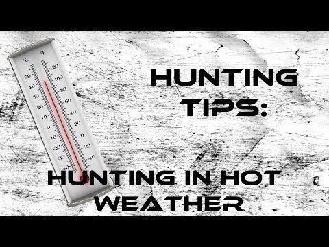 How To Prevent Hunting Dog Hypoglycemia