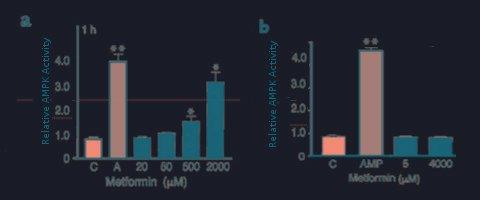 Cellular Effects Of Metformin, A Drug For Diabetes Mellitus