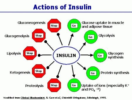 When Insulin Is Released It Causes