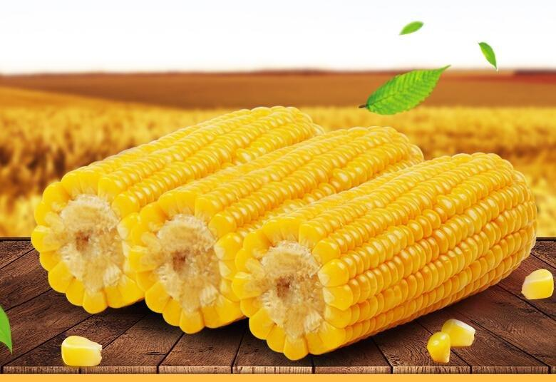 Is Corn Good For Diabetics