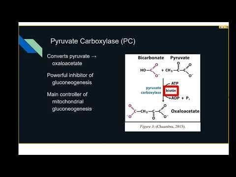 1115-70-4 - 1,1-dimethylbiguanide Hydrochloride - Metformin Hydrochloride - J63361 - Alfa Aesar