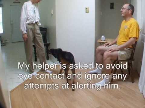 Diabetic Alert Service Dogs