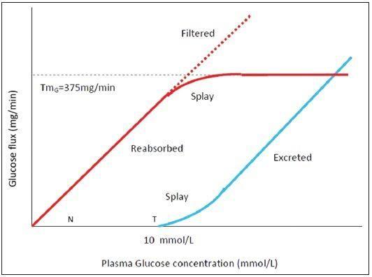 What Is The Tubular Maximum Of Glucose?