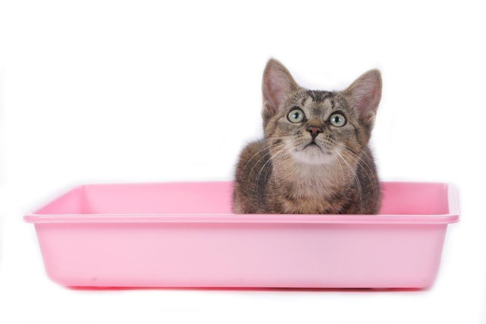 5 Signs Your Cat's Diarrhea May Be Serious | Pet Wellbeing