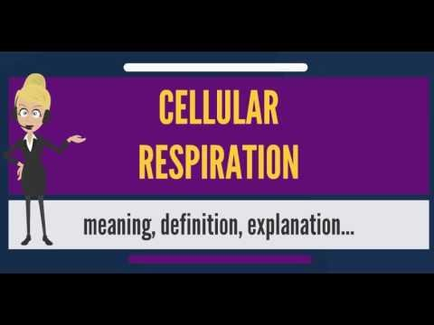 Biology-the Cell-aerobic Respiration