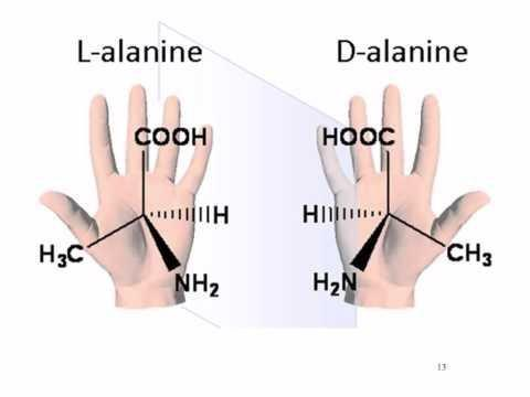 What Is The Disaccharide Composed Of One Glucose And One Galactose Molecule?