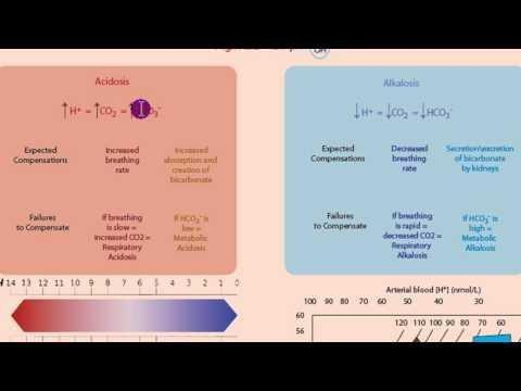 Metabolic Acidosis Vs Alkalosis