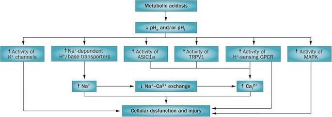 Treatment Of Acute Metabolic Acidosis: A Pathophysiologic Approach