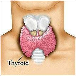 Cyclic Ketogenic Diet And Thyroid Hormone