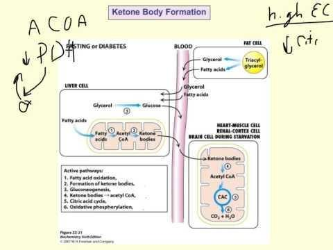 Why Ketone Bodies Are Formed?