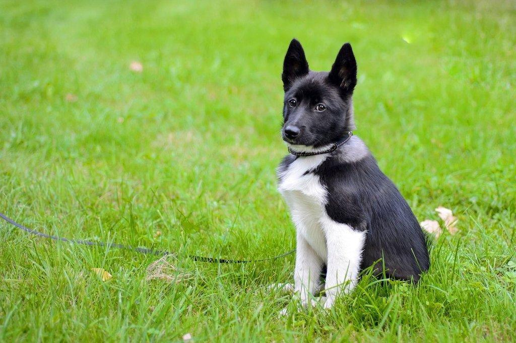 Increased Urination And Thirst In Dogs