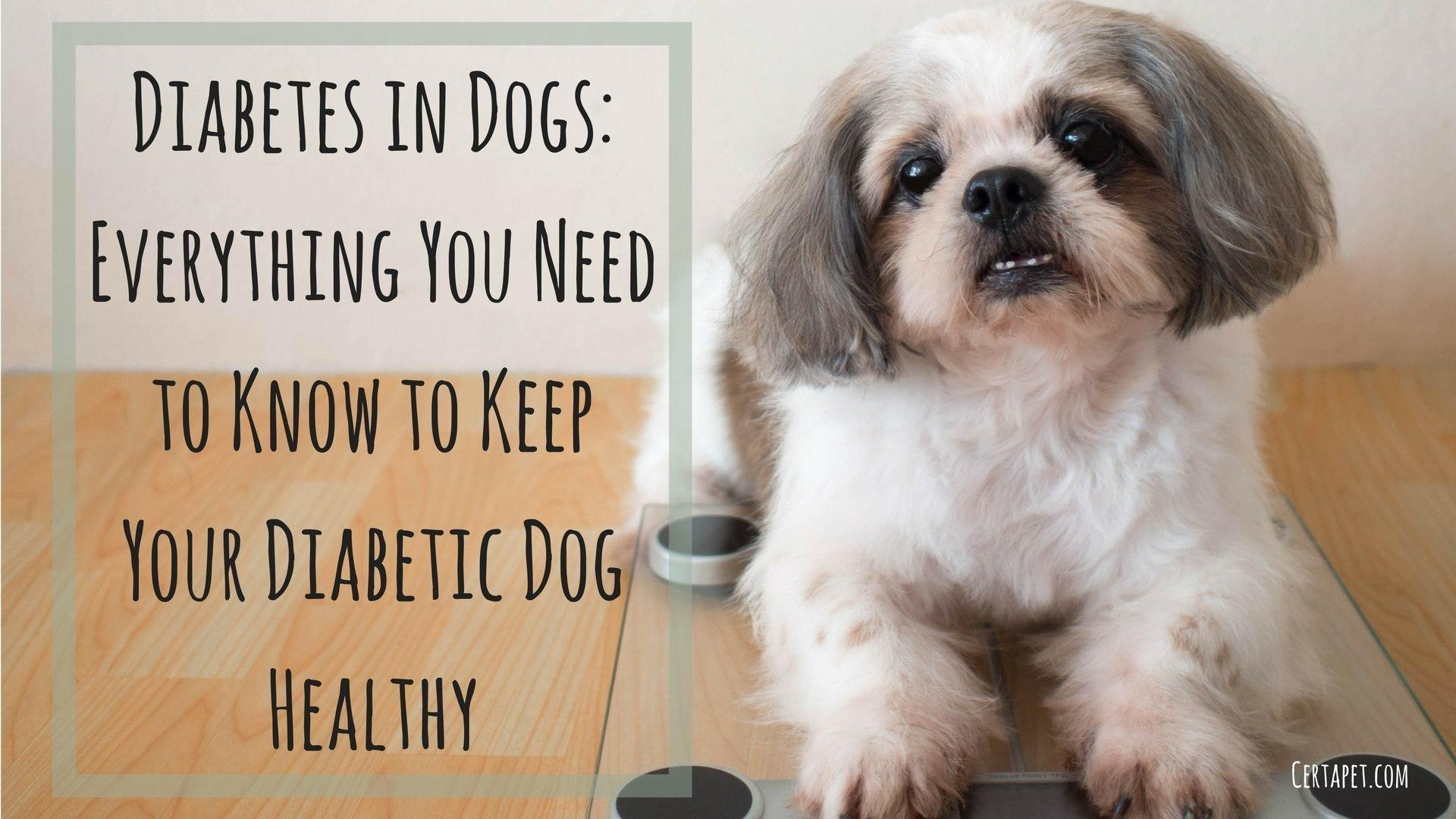Diabetes In Dogs: Everything You Need To Know To Keep Them Healthy
