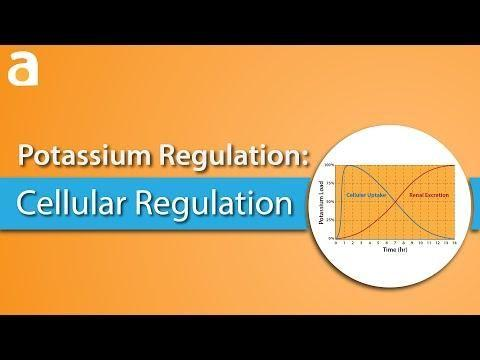 Why Does Potassium Shift In Acidosis?