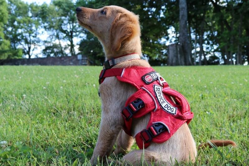 Diabetic Alert Dog Training Cost