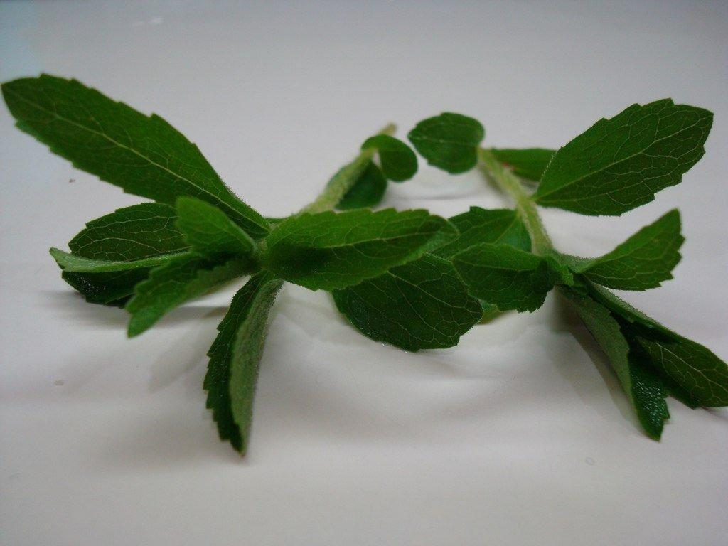 Stevia Has Been Found To Lower Blood Sugar Levels