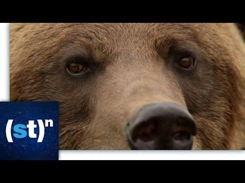 Bears And Diabetes | Oupblog