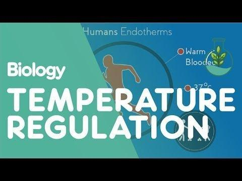 Masteringaandp Nutrition, Metabolism, And Body Temperature Regulation Chapter 24 P Besaw