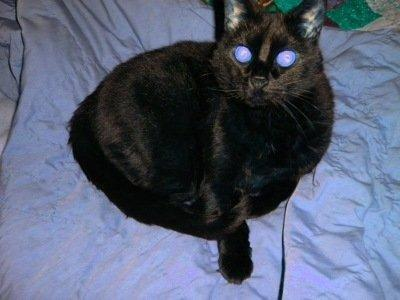 Diabetic Cats Who Stop Being Diabetic