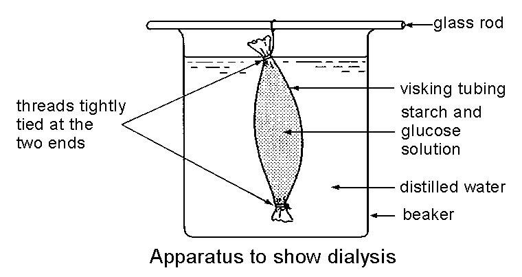 Selective Permeability & Dialysis