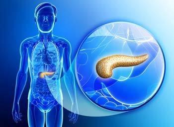 Where Is The Pancreas Located In The Female Body