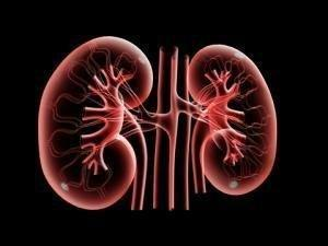How Diabetes Contributes to Kidney Failure