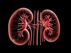 How Diabetes Contributes to Kidney Failure