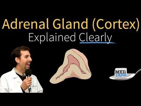 Volume 5, Chapter 37. Disorders Of The Adrenal Cortex